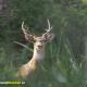 deer-park-in-almora