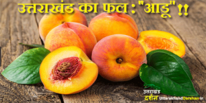 Uttarakhand Fruits
