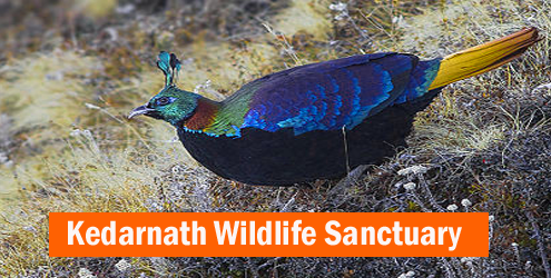 Kedarnath-Wildlife-Sanctuar