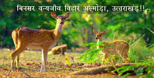 -binsar wildlife sanctuary