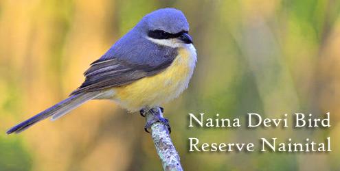 naina-devi-bird-reserve-nai