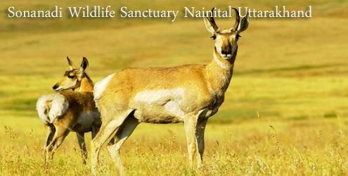 sonanadi-wildlife sanctuary