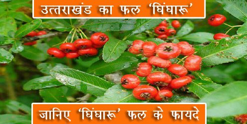 ghingharu-fruit